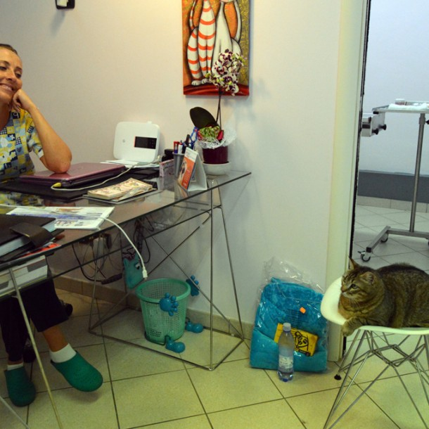 Dr. Cecilia Copparoni plays with her three-legged cat, Trilly.