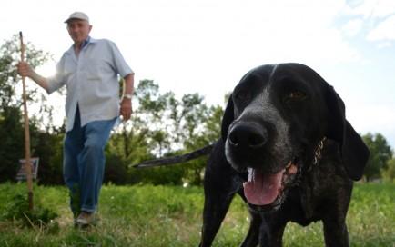 Gino Isidori and his truffle pointer, Lilla, search for truffles.